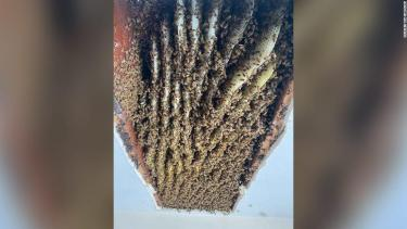 A Georgia woman was shocked to find at least 100,000 bees in her home -- for the second time
